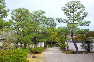 Les arbres de l'entrée