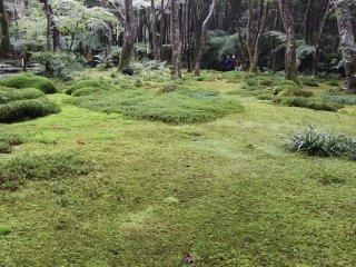 경내의 아름다운 이끼 정원