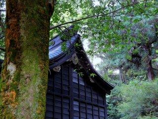 Vẻ đẹp duyên dáng của phòng cầu nguyện chính của Đền Yanagino Yashiro sâu trong rừng