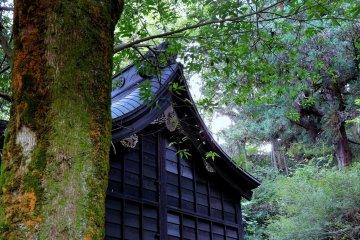 숲속 야나기노 야시로 신사 주기도회의 아름다운 경치