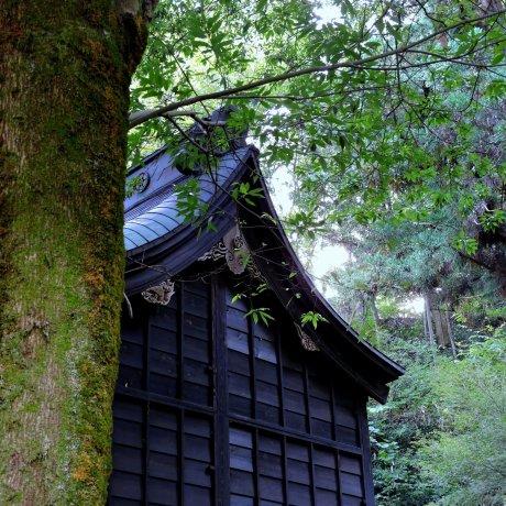 Graceful Yanagino Yashiro Shrine