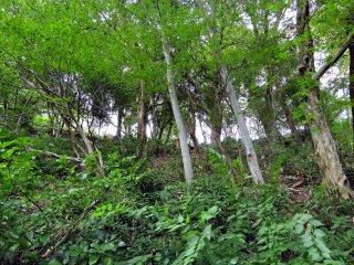 急な山の斜面に生える木々