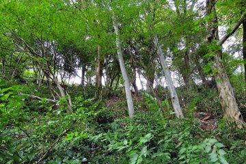 나무가 가파른 산허리에 서 있다