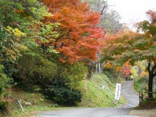 Прекрасные осенние листья