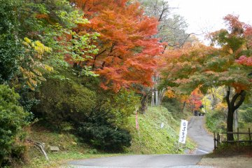 <p>Beautiful autumn leaves</p>