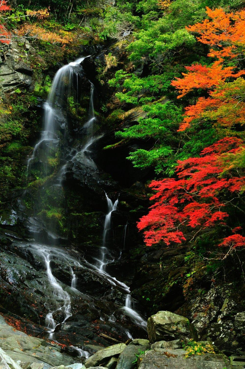 落合集落から祖谷渓谷沿い、目の前に出現した滝