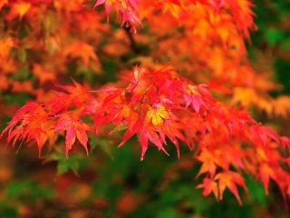 渓谷の色が秋色に変わる
