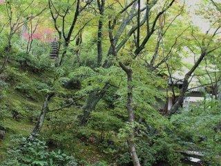 本堂と多宝塔の間にある池