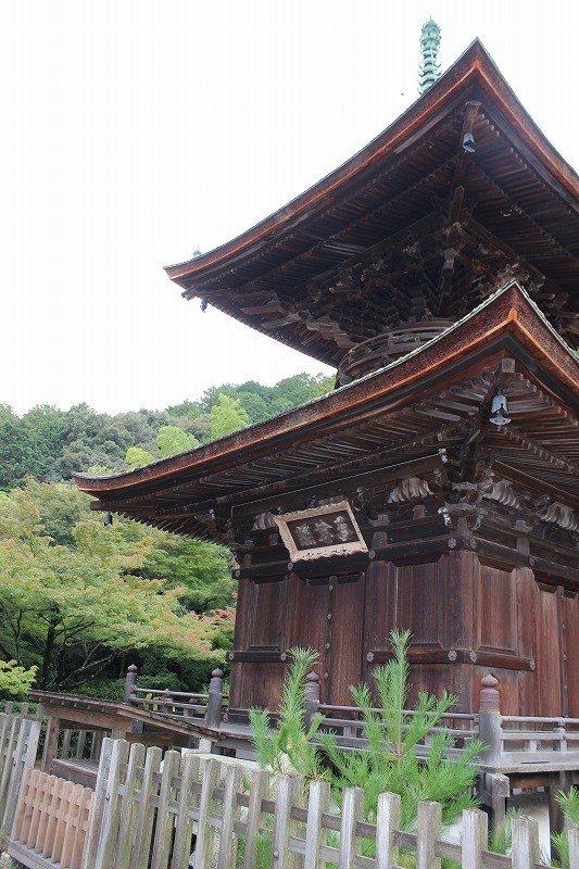 분로쿠 5(1595)년, 닛신상인이 이 절에 은거하여 당사를 건립하였다. 닛신은 가인이기도 했다. 그런 점에서 후지와라 사다이에의 산장, 시우정이 있던 이 오구라 산 기슭의 땅을 스미노쿠라 료이와 스미노쿠라 에이카가 기진하였다. 더욱이 다이묘, 고바야가와 히데아키 등이 기진해 당탑 가람이 정비됐다고 전해진다.
