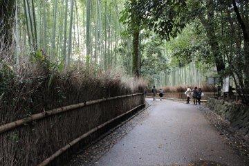 京都嵯峨野路を歩く~2