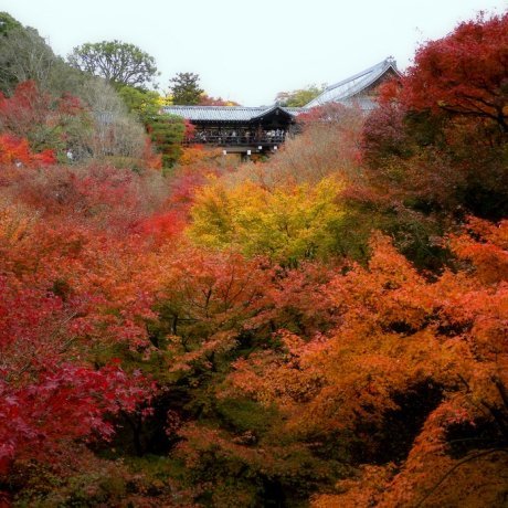 Tofukuji's Blaze of Glory