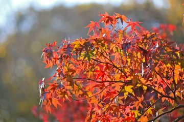 <p>You could spend all day at the park enjoying the beautiful colors of Autumn</p>