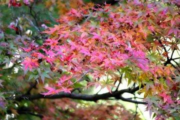 <p>Beautiful, beautiful Autumn colors!</p>