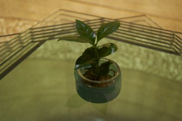 <p>So apparently everything starts from this little plant...</p>