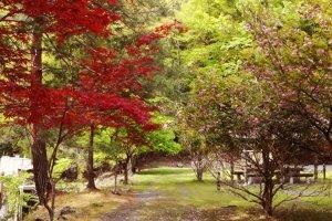 Странное место... С одной стороны дорожки весна, с другой - осень.