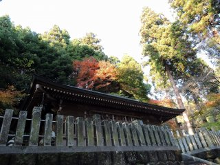Mikoshi-Den Hall is surrounded by both evergreen and colorful deciduous trees