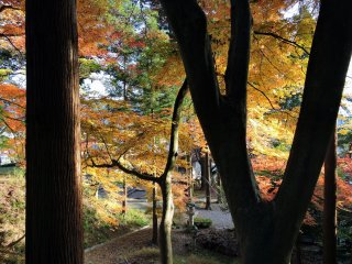 Looking down at the shrine grounds below through brilliant maple leaves