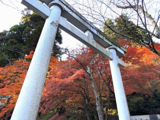 Stone torii standing at the entrance to Okafuto Shrine from Kakyo Park