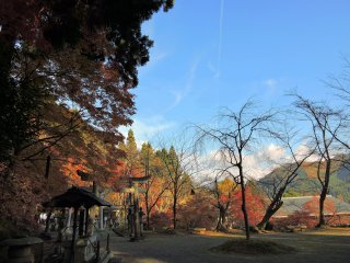 Colorful autumn leaves and bare trees under the blue sky, viewed from the grounds of Okafuto Shrine