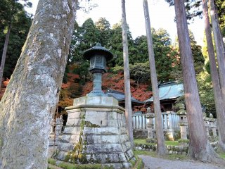 Bronze lantern surrounded by tall cedar trees