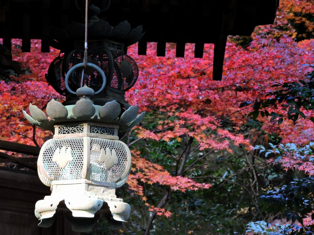 Bronze lantern hanging from the roof of the main hall with the burning red autumn leaves in the backdrop