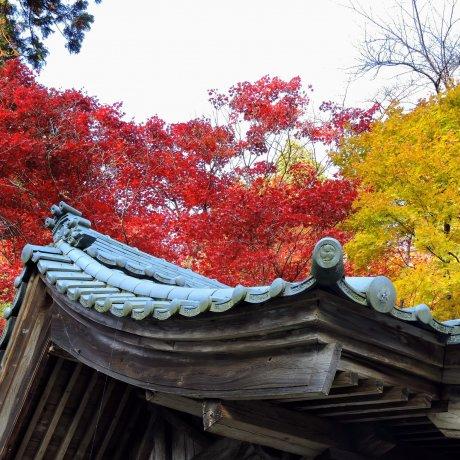 Sangetsu-Ro & Izumo Taisha em Fukui