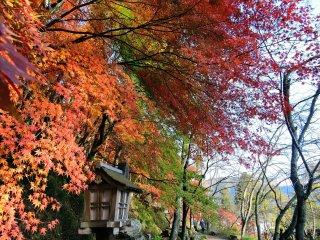 Coloridas folhas decorando o caminho