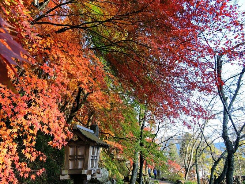길을 장식하는 다채로운 나뭇잎들