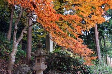 오솔길 위에 걸려있는 석등이나 오렌지색 나뭇잎들