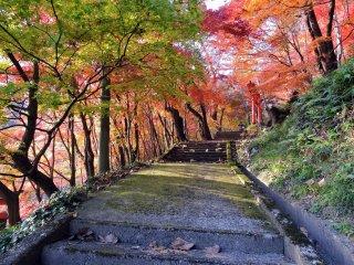 晴れた秋日和には紅葉のトンネルくぐりが一番だ!