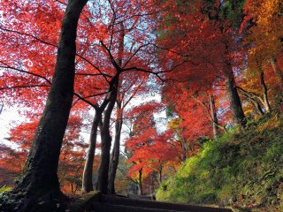 華やかな紅葉に彩られた、山頂の金比羅神社へと続く遊歩道