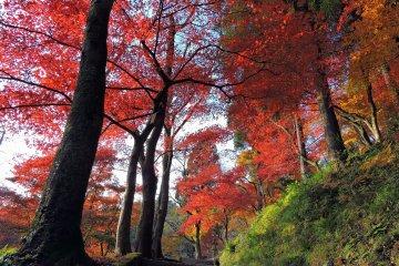 카쿄(花筐) 공원의 콘피라 신사(金比羅神社)