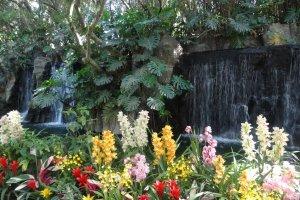 Bunga-bunga di depan air terjun membawa suasana tropis ke selatan Jepang