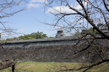 <p>กำแพงหินอันสูงชันเป็นปราการสำคัญของอาณาเขตปราสาทคุมาโมโต้ที่ได้รับการออกแบบอย่างดีเยี่ยม</p>