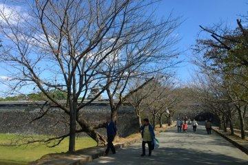 <p>ทางเดินเข้าปราสาทซึ่งเรียงรายไปด้วยต้นซากุระ แล้วถ้าหากว่าเป็นฤดูใบไม้ผลิที่ซากุระเบ่งบานนั้นบริเวณนี้จะงดงามมากทีเดียว</p>
