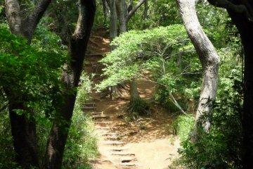 La Randonnée du Daibutsu à Kamakura