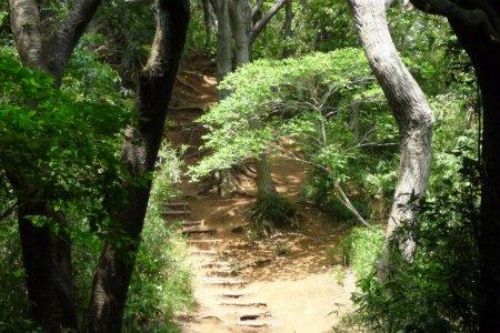Đường mòn đi bộ Daibutsu, Kamakura