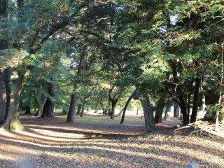 京都御苑北側の林