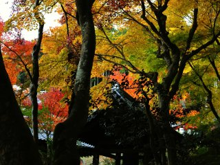 The sound of the bell echoing in the tunnel of autumn leaves