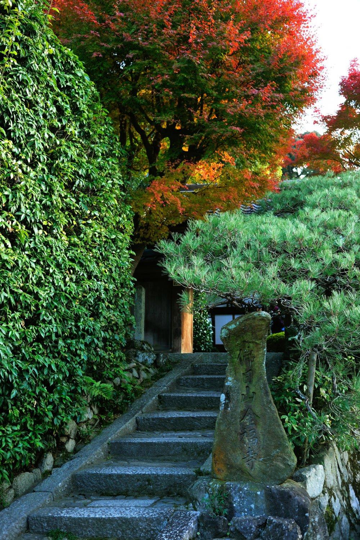 金福寺の山門、ともすれば見過ごしてしまいそうな、小じんまりとした佇まい