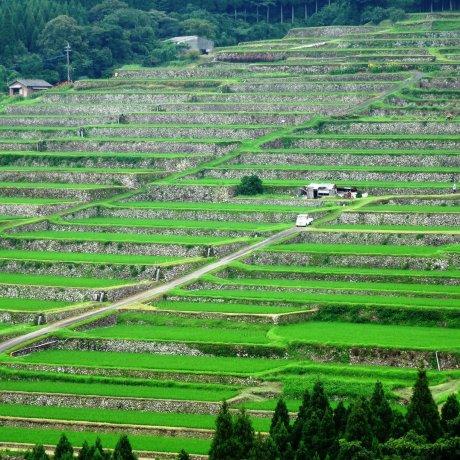 Area Sawah Sakamoto