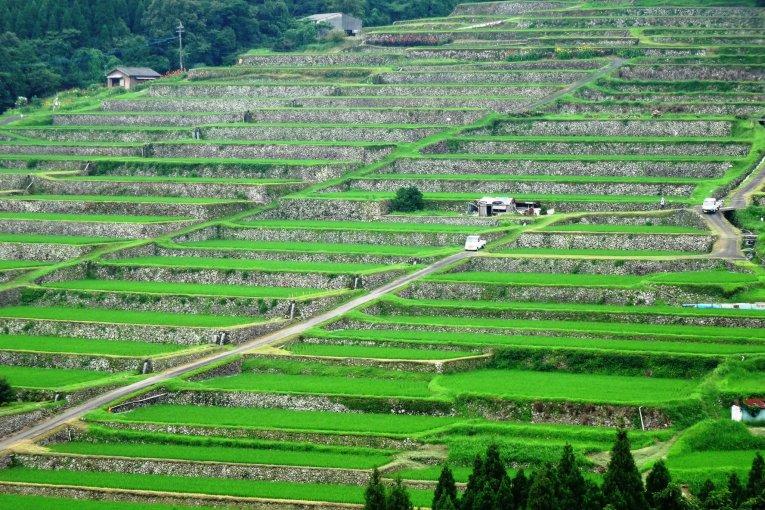 Рисовые Террасы Сакамото
