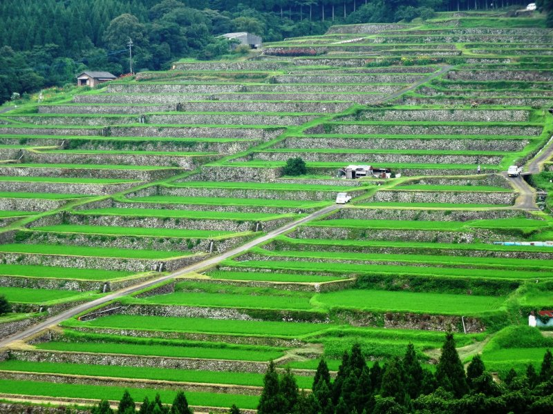 <p>A view of the Sakamoto rice terraces from the viewing platform</p>
