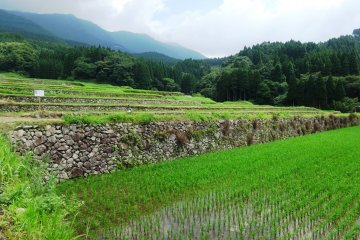 <p>You can wander freely amidst the terraces on the paved or dirt paths</p>