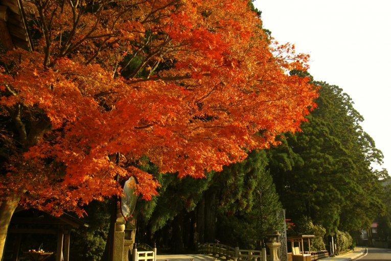 Koyasan's Sacred Site: Okunoin