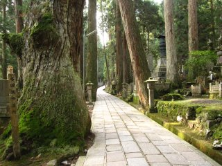 The path goes through various moss-covered tombstones and big, ancient cypresses and cedar trees.