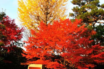 <p>The autumn leaves around the Phoenix Hall added beauty to the newly renovated hall</p>