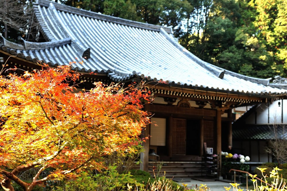 Сбоку храма тщательно ухоженные хризантемы и кленовые листья.