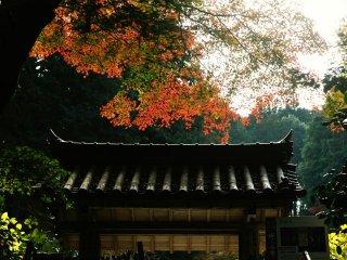 Ворота горного храма окутаны тишиной, как раз подходящей цветочному храму.
