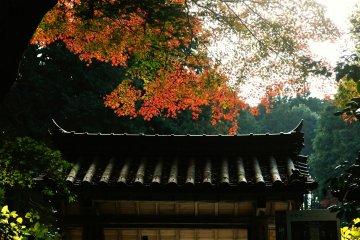 <p>Ворота горного храма &nbsp;окутаны тишиной, как раз подходящей цветочному храму.</p>